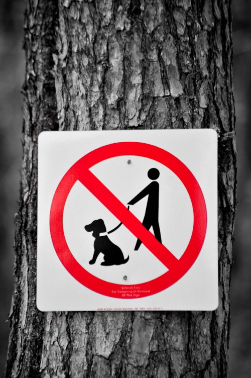 Wayfinding and Typographic Signs - just-dont-bring-your-dog