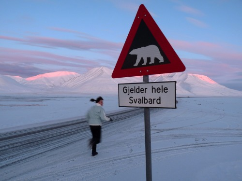 Wayfinding and Typographic Signs - beware,-polar-bears-!