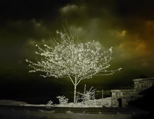 Infrared Photo