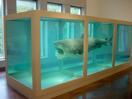 Hirst's Shark