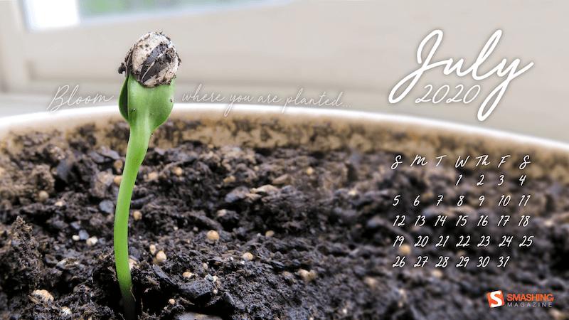 Bloom où vous êtes plantés