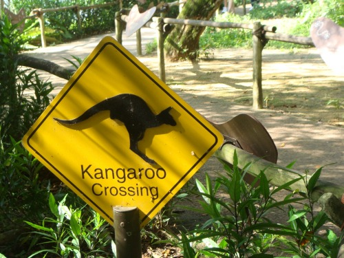 Wayfinding and Typographic Signs - kangaroo-crossing-signage