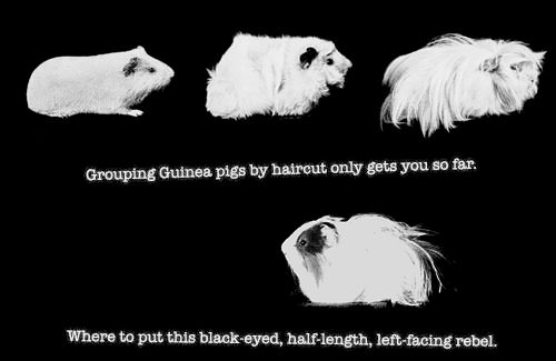 Grouping devices is like grouping guinea pigs.