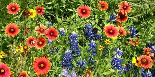 A field of flowers exhibits a flowing rhythm