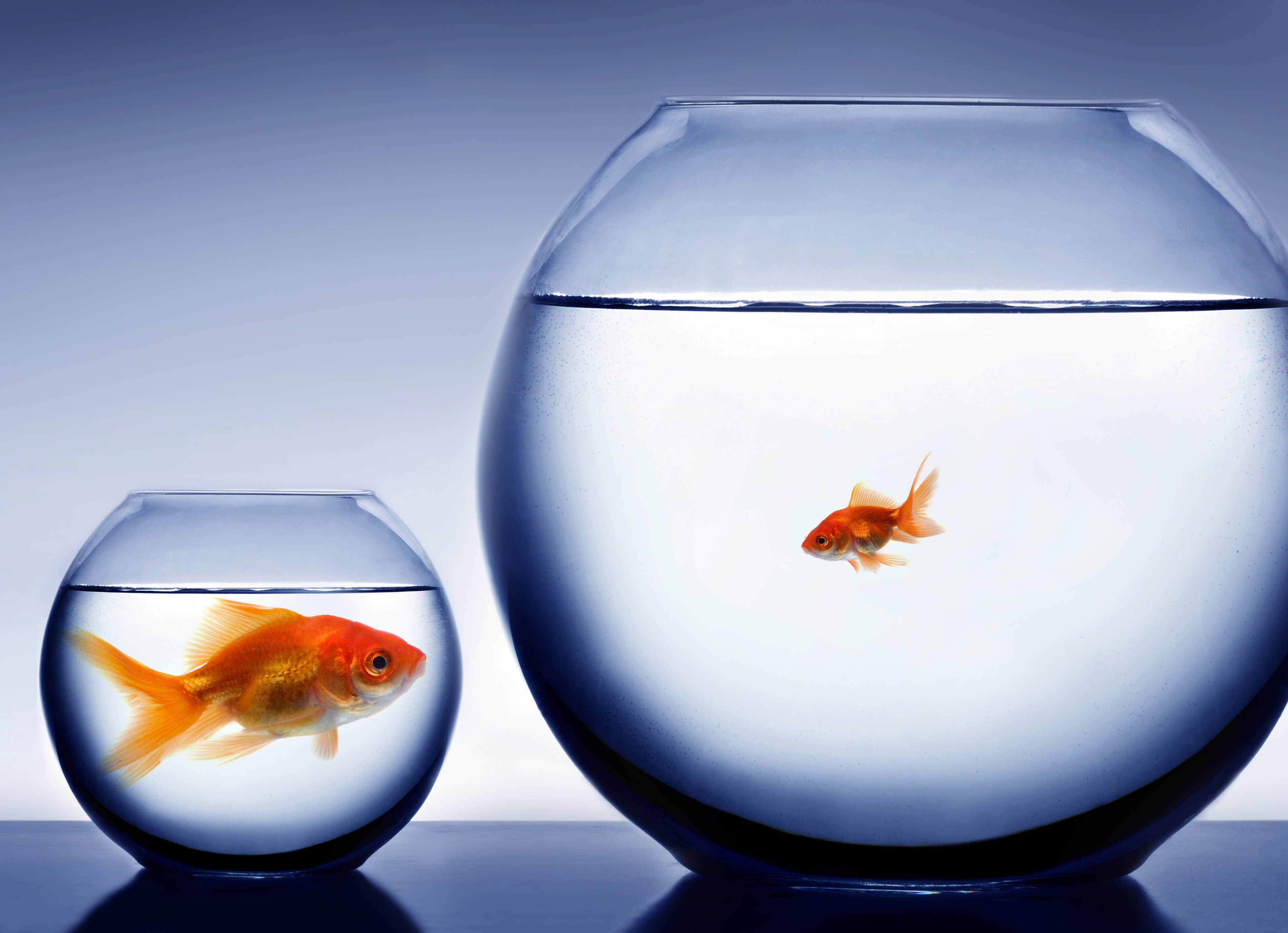 Is success down to the quality of your work smashing for Be a big fish in a small pond