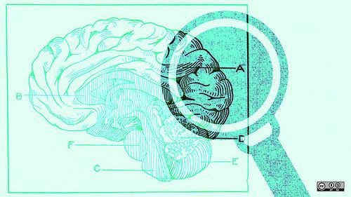 brain_studies_mini