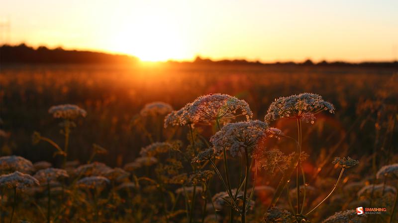 Estonian Summer Sun