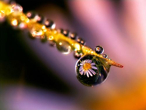Flower in a Drop