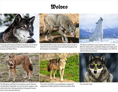descriptive text examples animal