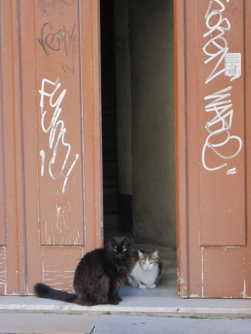 Wayfinding and Typographic Signs - lisbon-cats