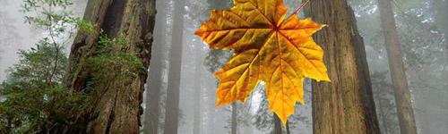 Leaf Animation