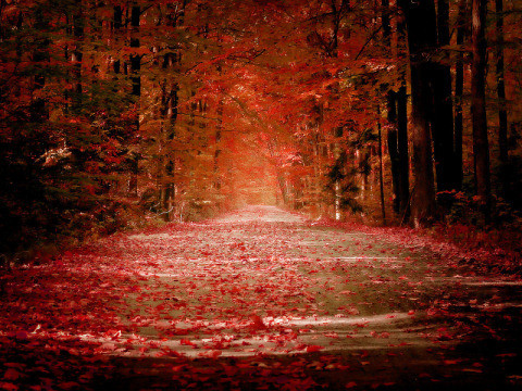 Beautiful Nature Wallpapers - Autumn by ~sican