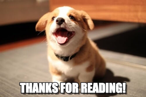 Puppy thanks you for reading