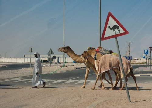 Wayfinding and Typographic Signs - camel-crossing-doha-qatar