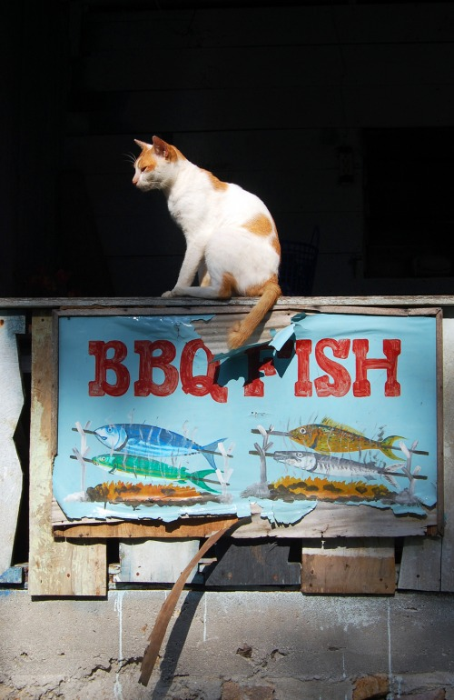 Wayfinding and Typographic Signs - bbq-cat