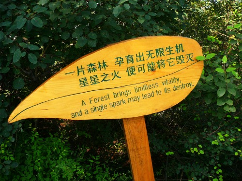 Wayfinding and Typographic Signs - a-forest-brings-limitless-vitality