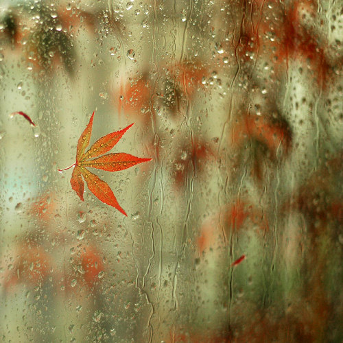 35 Beautiful Examples Of Rain Photography Smashing Magazine