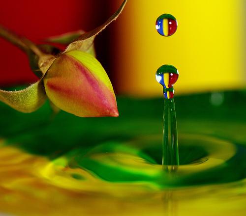 Water & Rose macro