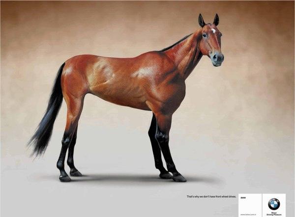 BMW Horse