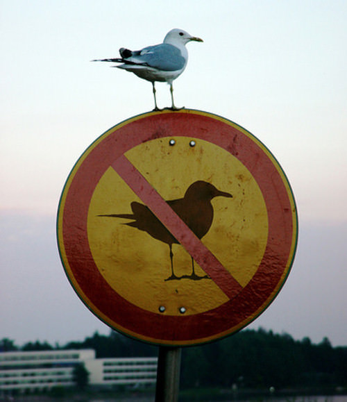 Mind-Blowing Photos - Seagull on a sign