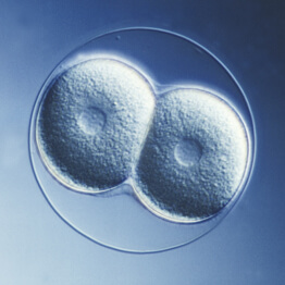 The initial cellular division of an egg that leads to new life.