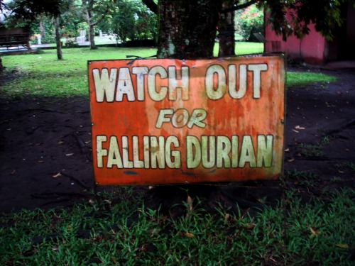 Wayfinding and Typographic Signs - beware-of-falling-durian