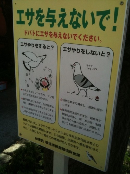 Wayfinding and Typographic Signs - bird-poop-signage