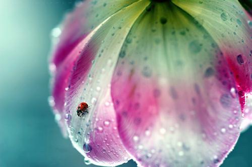 35 Beautiful Examples Of Rain Photography — Smashing Magazine