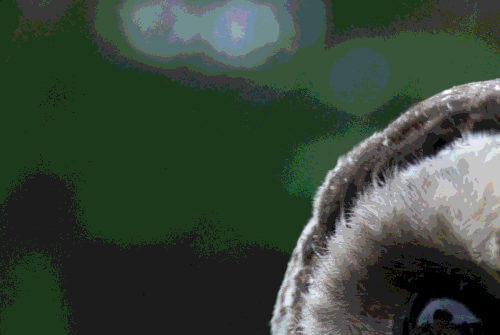 Close up of an owl with reduced colors