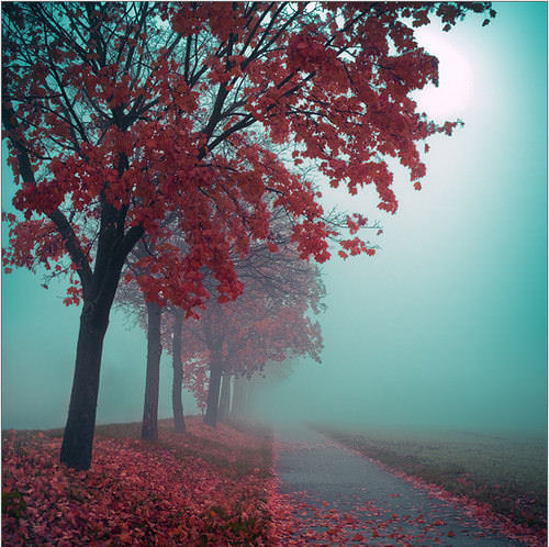 Mind-Blowing Photos - Autumn in red