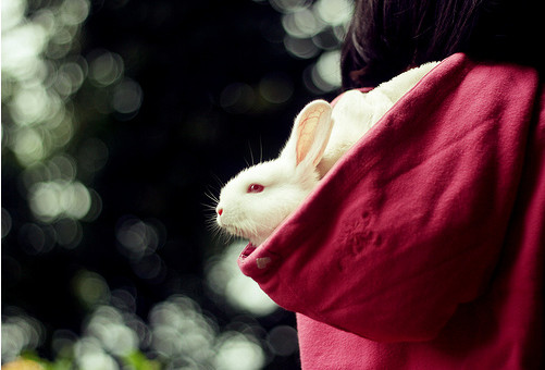 Beautiful Photography - bunny bokeh