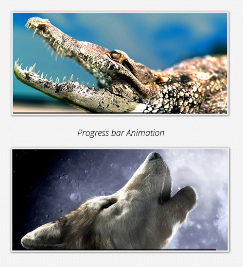 Progress bar Animation for each image