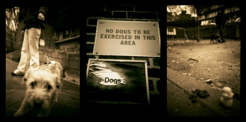Wayfinding and Typographic Signs - dog---no-dogs---doggy-doo