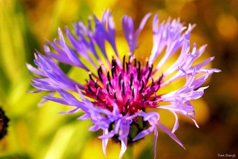 Beautiful  Photo Blog