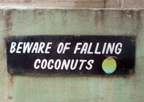 Wayfinding and Typographic Signs - beware-of-falling-coconuts