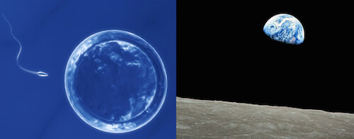 "An egg on the verge of fertilization and ""Earthrise,"" taken by Apollo 8 astronaut William Anders in 1968."