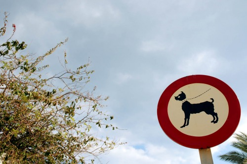 Wayfinding and Typographic Signs - wet-dog-walk